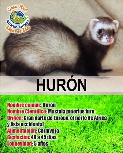 Hurón