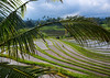 The terraced rice fields, Bali island, Jatiluwih, Indonesia (Eric Lafforgue) Tags: agricultural agriculture asia asian bali2028 balinese breathtaking countryside crops cultivated culture farming farmland fields green growing horizontal indonesia indonesian irrigation landscape lush nature nopeople outdoors paddies reflection ricefields ricepaddies riceterraces rural scenery scenic subak terracefarming terraced terraces terracing unescoworldheritagesite verdant village water jatiluwih baliisland