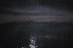 elk hollow (Mindaugas Buivydas) Tags: lietuva lithuania color spring april forest pond tree trees night twilight evening fog mist blue mystery verkiųregioninisparkas verkiairegionalpark shallowdepthoffield mindaugasbuivydas mood moody dark darkness unconventional elkhollow