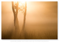 Missing (Luuk Belgers) Tags: fog mist tree sunlight morninglight mysterious grass