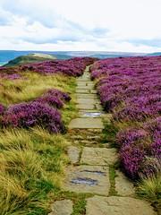 COAST TO COAST WALK 2015 (pajacksonartist) Tags: wainwright coasttocoast walk heather purple path footpath north york moors national park yorkshire england