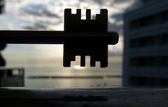 "silhouette for MACROMONDAYS""Explored""06/06/2017 (carloancona) Tags: macromondays silhouette"