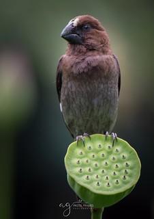 Bird from Durban