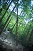 // // (selyfriday) Tags: selyfriday wwwnassiocomempty nassiocom olympusxa3 olympus xa3 kodak gold 200iso kodakgold200 castricum forest trees woods nederland netherlands dutch holland