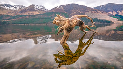 Amazing find .... (Einir Wyn Leigh) Tags: loch landscape tree water scotland snow winter reflection treasure colorful detail weather wood nature natural colour