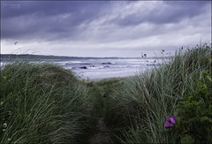 175 - Out of Synch (North Light) Tags: coast grass flower sea weather gale dunnetbay caithness scotland
