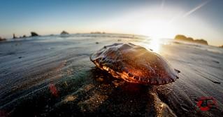 Crab Shell Sunset