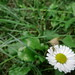 Bug+on+the+Daisy+2