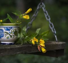 (donna leitch) Tags: swing eveningprimrose flowers 100mm macro stilllife