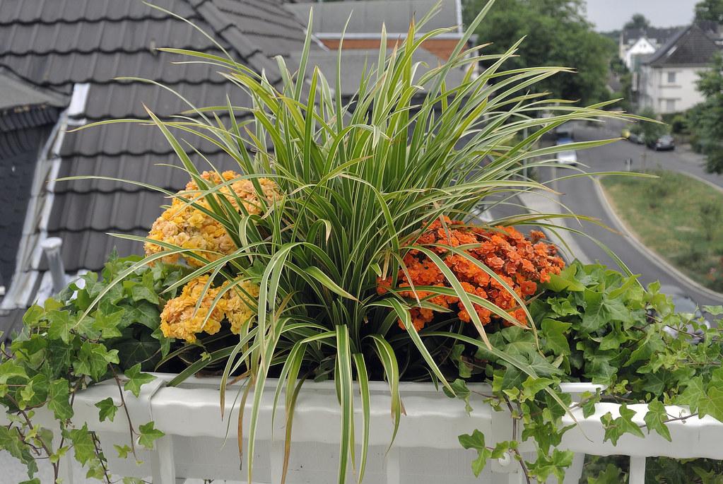 The World S Best Photos Of Balkonpflanzen And Bluten Flickr Hive Mind