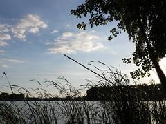 Szałe 2: Flying Birds? Water reservoir in Szałe by Kalisz, Poland. Called also 'Jezioro (Lake) Pokrzywnickie'. Taken by WR. (kachigarasu) Tags: poland landscape ポーランド ヨーロッパ 風景 szałe シャウェ kalisz カリシュ wielkopolska ヴィエルコポルスカ lake 湖 人工湖 water reservoir 貯水湖 貯水 人造湖 貯水池 jezioro pokrzywnickie birds 鳥 飛ぶ鳥 鳥の群 szale 空 sky evening 夕暮れ 夕方