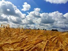This is summer (Tobi_2008) Tags: sommer summer feld field wolken clouds himmel sky sachsen saxony deutschland germany allemagne germania