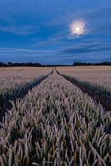 Blue in the Wheat (Matt Rimkus Photography) Tags: schleswigholstein blue hour lindaunis guckelsby schlei moon wheat field thumby deutschland de