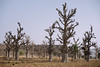 Baobab (CIFOR) Tags: africa dry landuse environmentalimpact carbon cifor reforestation trees burkinafaso environmentalmanagement systematicreview dryforests loagavillage landmanagement environmentallegislation climatechange baobab horizontal boulkiemdé centreouest bf