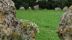 Offerings - Rollright stone circle, Oxfordshire (Elisabeth Redlig) Tags: oxford elisabethredlig history travel rollrightstones neolithic standingstones paganism mystery summer summersolstice offerings