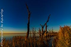 IMG_5405 (biglaptogs) Tags: barmera lakebonney riverland sa states