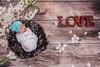 Louise (angela.macario) Tags: newborn louise bebe nenem criança angela macario goiania goias brasil