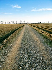 IMG_20170225_164855 (storvandre) Tags: storvandre lombardia lombardy countryside campagna nature landscape road zibido milano parco agricolo