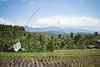 Rizière perchée (Ye-Zu) Tags: tourdumonde rizière tdm worldtour munduk bali indonésie