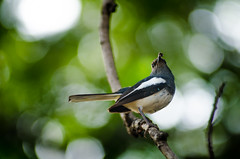 Bird (bappadityachandra) Tags: bird nature forest outdoor green travel tree beauty bee