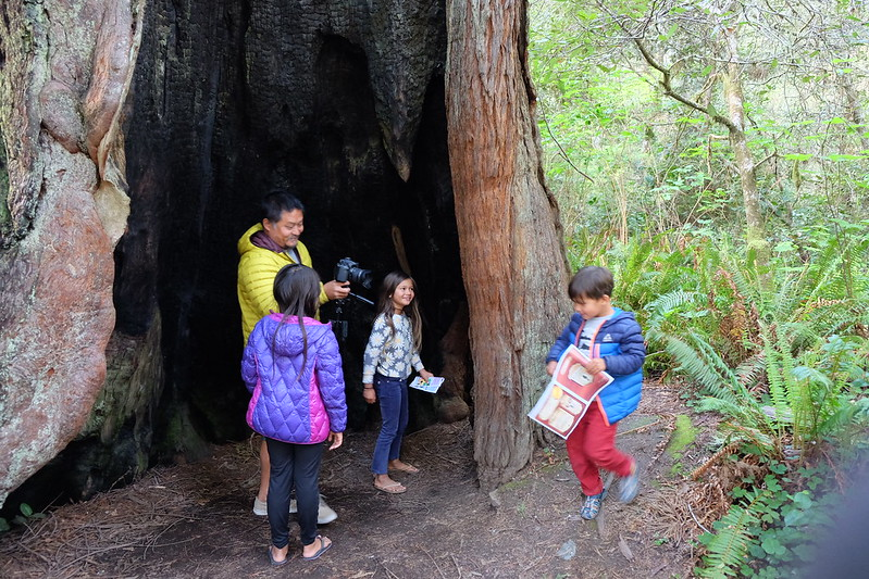 Blog Redwood National Park