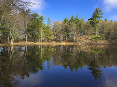 Springtime Reflections at Pine Banks Pond (RobertCross1 (off and on)) Tags: boston ma malden massachusetts melrose newengland pinebankspark bluesky clouds forest iphone iphone6 iphoneography lake landscape pine pond reflection spring trees water unitedstates us
