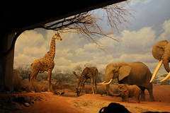 Los Angeles Museum of Natural History