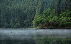 Smoke on the Water (jasty78) Tags: lochard loch ard smoke mist scotland nikon d5200 tamron150600mm 150mm trossachs