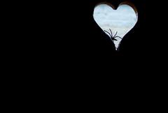 Coeur sombre (BenoitGEETS-Photography) Tags: canon 1100d spider araignée coeur noir misère trahison mort sombre domicile pierre miseries betrayals dead heart dark stone imagination désespoir despair geets benoitgeets misterblue сердце serdtse herz قلب qalb cor 心臟 xīnzàng corazón לב croí cuore 心 kokoro hart hjärta kalp blackwhite