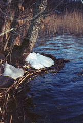 untitled (amanda aura) Tags: film lohja finland pentaxespio lake ice nature