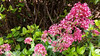 x20170531_110643 - Valerian (Lovelli) Tags: roper road flowers roses californian poppies fire hydrant sign fushias labour supporter