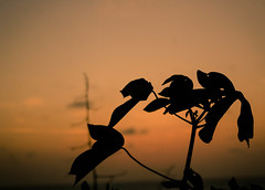 _MG_9437 (nickdlh92) Tags: sunset atardecer sun crepusculo