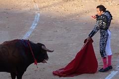 entrando a matar (aficion2012) Tags: istres francia france corrida bullfight bull toro toros taureau fundi elfundi juan pedro domecq tauromachie tauromaquia matador torero toreo suertedematar