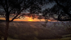 Coming Up DSC_5367 (BlueberryAsh) Tags: 2017 ccc strathcreek murchisongaplookout sunrise landscape outdoors hills gumtrees valleys cloudsstormssunsetssunrises light nikond750 nikon24120