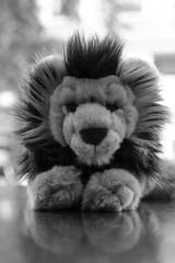 Heribert VI. (xockisfriends) Tags: heribertvi herbert herbie lion zwerglöwe serengeti herrscher mähne gnu könig löwe reise hilfe help würdig audienz krone volk