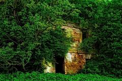 Abandoned (Kalev Vask.) Tags: digital kalevvask postprocessed photoshop photomanipulation digiart photoart painterly artistic creative estonia summer trees ruins dap topaz on1