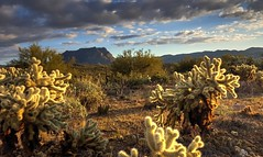 Desert Beauty (J. A. Branch) Tags: az arizona cactus superior sunset cloudy desert cholla hdr