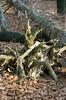 Ojcowski National Park.  Drewno w stadium rozkładu 683 (Hejma (+/- 5400 faves and 1,7 milion views)) Tags: ojcowski national park trees wood decay stage atumn leave