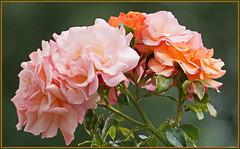 Rosige Grüße ... (Kindergartenkinder) Tags: frühling park blume garten kindergartenkinder personen blumen rosengarten rosen seppenrade