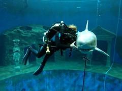 Er hatte keine Chance, dem Selfie zu entkommen. (chipmonk) Tags: 2017 dive4life rebreather