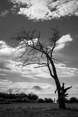 DSCF0852.jpg (yannsegui) Tags: arbre mort