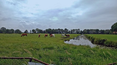 Frysian landscape (132310700) (Le Photiste) Tags: clay frysianlandscape horses fryslânthenetherlands thenetherlands nederland landscape clouds nature naturesprime rainbowofnaturelevel1red planetearthnature planetearth ourearth afeastformyeyes aphotographersview autofocus artisticimpressions artyimpression blinkagain beautifulcapture bestpeople'schoice creativeimpuls cazadoresdeimágenes creative digifotopro damncoolphotographers digitalcreations django'smaster friendsforever finegold fairplay greatphotographers giveme5 hairygitselite ineffable infinitexposure iqimagequality interesting inmyeyes kreativepeople livingwithmultiplesclerosisms lovelyflickr lovelyshot myfriendspictures mastersofcreativephotography momentsinyourlife motorolamotog niceasitgets ngc photographers prophoto photographicworld photomix soe simplysuperb simplybecause saariysqualitypictures showcaseimages simplythebest thelooklevel1red universalart universal vigilantphotographersunitelevel1 vividstriking wow worldofdetails yourbestoftoday theredgroup