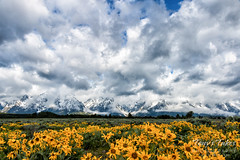Dramatic skies and wildflowers over the Tetons