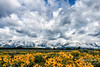 Dramatic skies and wildflowers over the Tetons (TonysTakes) Tags: grandtetons grandtetonnationalpark landscape mountains wildflowers weather