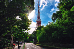 東京鐵塔 (M.K. Design) Tags: 2017 japan travel landscapes nikon d800e nature life tokyo karuizawa ultrawide tokyotower tree green 日本 東京 輕井澤 旅行 旅遊 東京鐵塔 增上寺 芝公園 超廣角 尼康 自然 風景