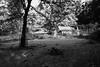 Tierpark 8 (FSR Photography) Tags: tierpark canon canon400d canondslr bw blackandwhite blackwhite sw schwarzweis schwarzweiss monochrome monochrom park hütte cabin fsr fsrphotography