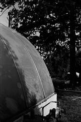 inbetween (lostinblue) Tags: 35mm bamboo farm savannah georgia scad student 1992 black white bw minolta