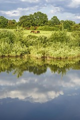 Free (frantiekl) Tags: landscape nature natural horses animals water pond reflection clouds sky green trees outside countryside serene happy free freedom herd rural flora day country june family life 50mm horse