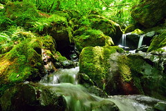 The valley stream by which green lovely is early summer (chikaraamano) Tags: green lovely moss water stones outdoor rocks mountain valley creature stream flow ravine finally youngleaves earlysummer upstream charmed repeatedly light freely flows