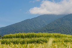 IMG_0595 (Ela&Piotr) Tags: bali indonesia indonezja jatiluwih ricefields